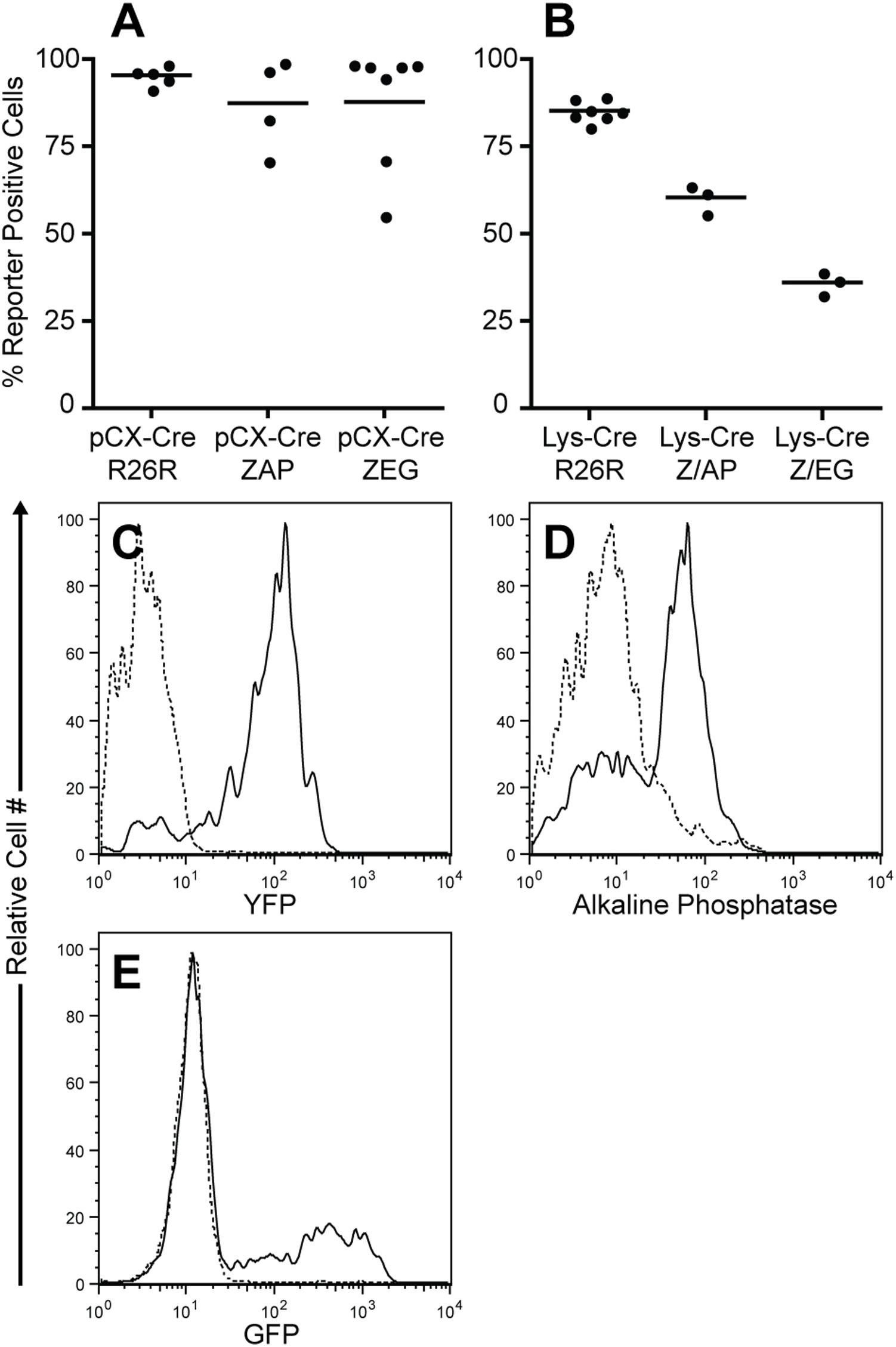 Placental Alkaline Phosphatase Antibody | H17E2 gallery image 1