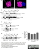 Protein Gene Product 9.5 Antibody | 31A3 thumbnail image 4