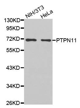 PTPN11 Antibody gallery image 1