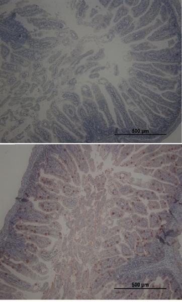 RAGE Antibody gallery image 1