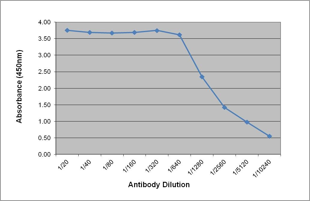 Sex Hormone Binding Globulin Antibody   30.6H2 gallery image 1