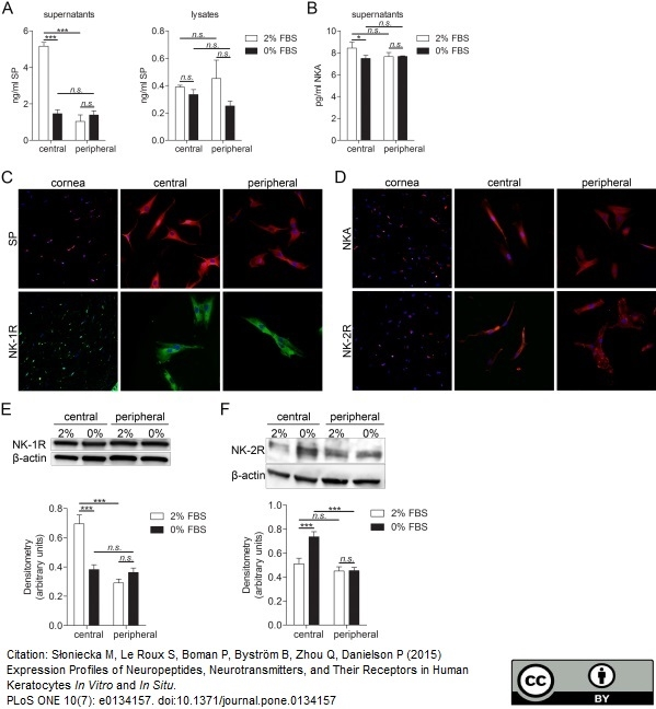 Substance P Antibody gallery image 2
