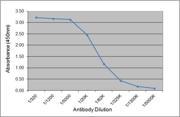 Thyroglobulin Antibody | 89.3F10 gallery image 1
