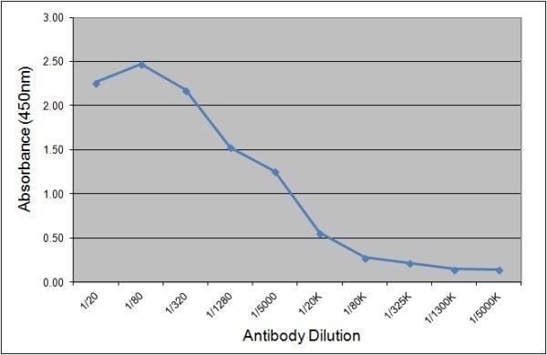 Thyroglobulin Antibody | 89.5C3 gallery image 1