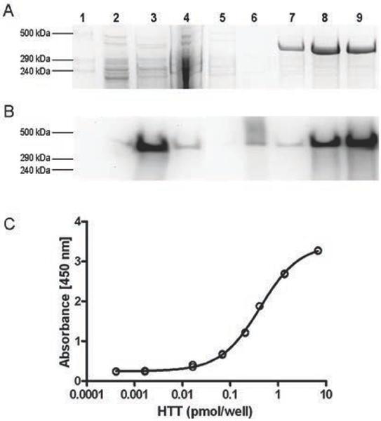 Huntingtin Antibody | HDB4E10 gallery image 3