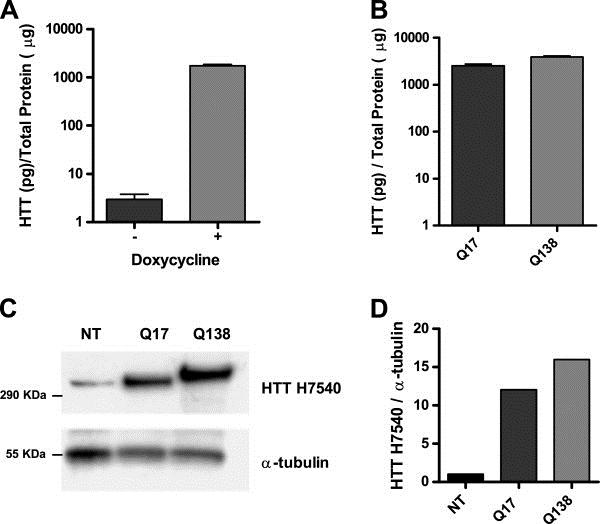 Huntingtin Antibody | HDB4E10 gallery image 4