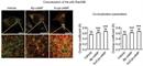Huntingtin Antibody | HDC8A4 thumbnail image 3