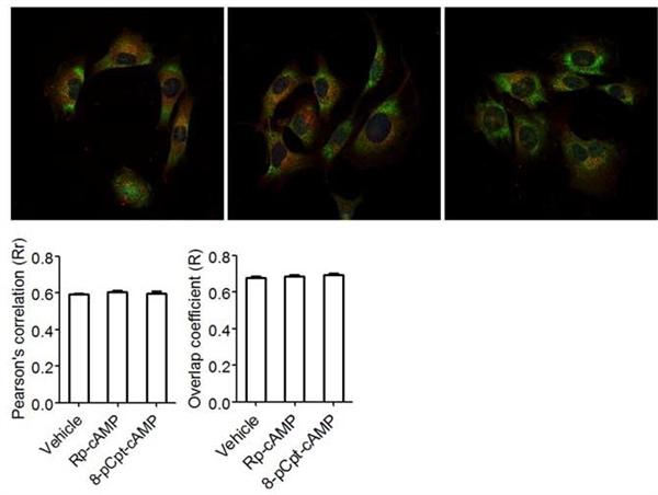 Huntingtin Antibody | HDC8A4 gallery image 4