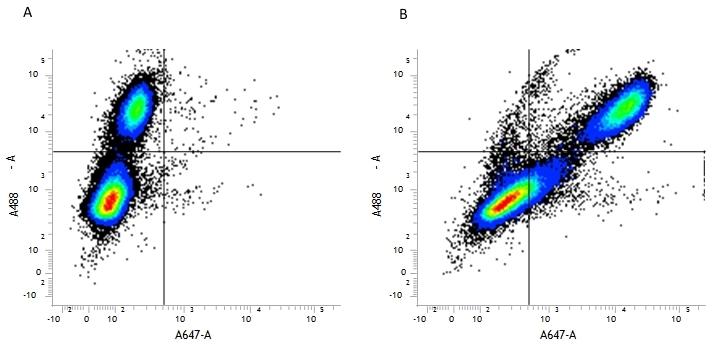CD107b Antibody | M3/84 gallery image 2