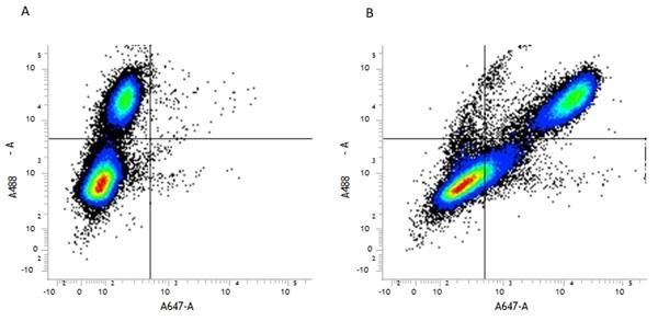 CD107b Antibody | M3/84 gallery image 1