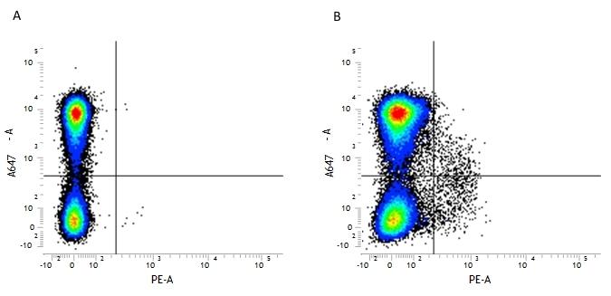 CD117 Antibody   2B8 thumbnail image 1