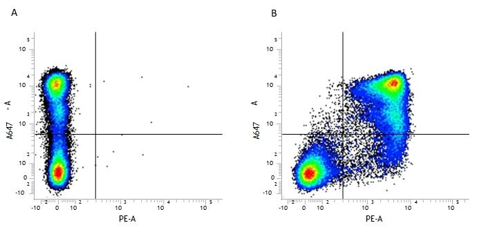 CD11b Antibody   5C6 thumbnail image 8