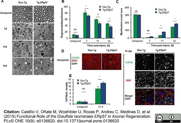 CD11b Antibody | M1/70.15 thumbnail image 9