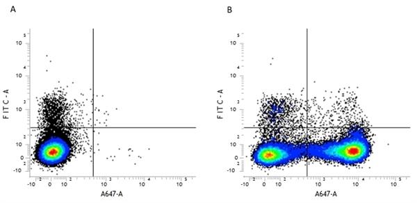 CD11b Antibody | M1/70.15 gallery image 1