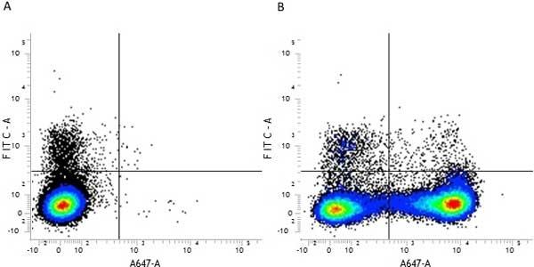 CD11b Antibody | M1/70.15 gallery image 5