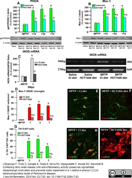 CD11b Antibody | M1/70.15 gallery image 4