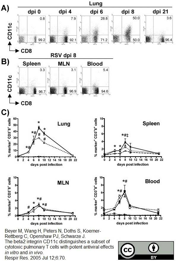 CD11c Antibody | N418 gallery image 5