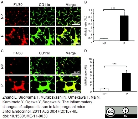 CD11c Antibody | N418 gallery image 3