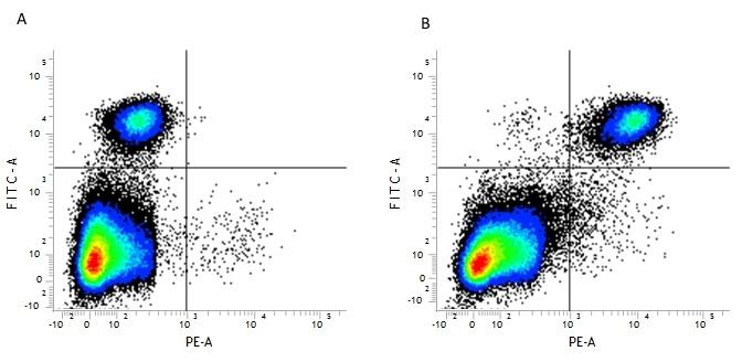 CD14 Antibody | biG53 gallery image 1