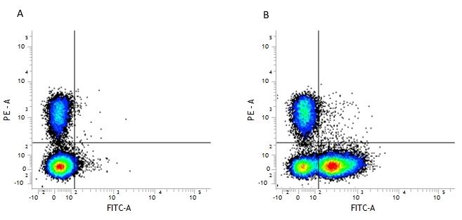 CD16/CD32 Antibody | FCR4G8 gallery image 1