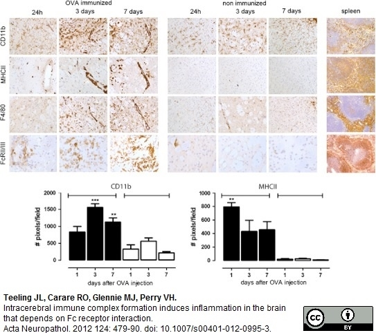 CD16/CD32 Antibody | FCR4G8 gallery image 2