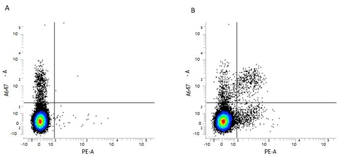 CD161 / NK1.1 Antibody   PK136 thumbnail image 1