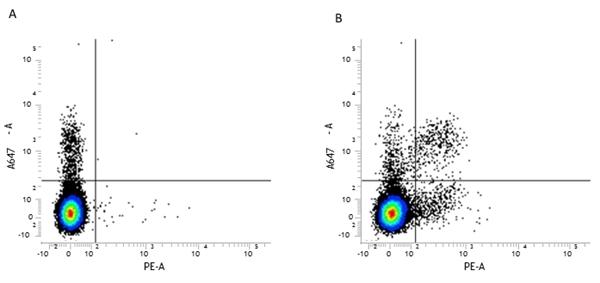 CD161 / NK1.1 Antibody | PK136 gallery image 1