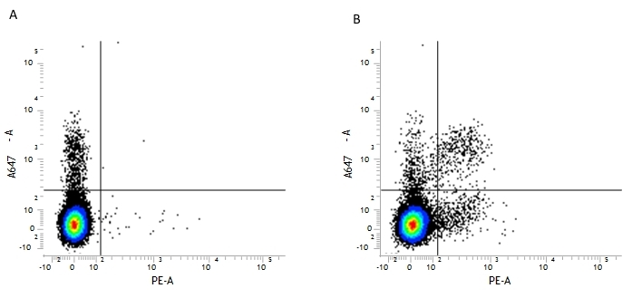 CD161 / NK1.1 Antibody | PK136 gallery image 2