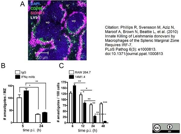 CD169 Antibody | 3D6.112 gallery image 8
