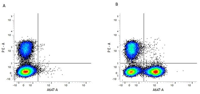 CD19 Antibody | 6D5 thumbnail image 2