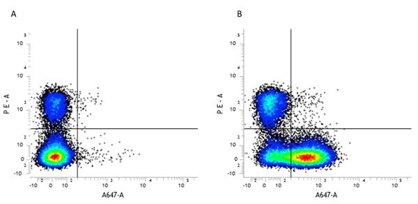 CD23 Antibody | B3B4 gallery image 1