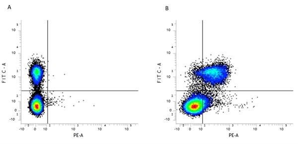 CD28 Antibody | E18 gallery image 2