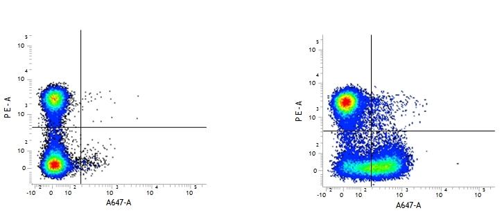 CD28 Antibody | E18 gallery image 1
