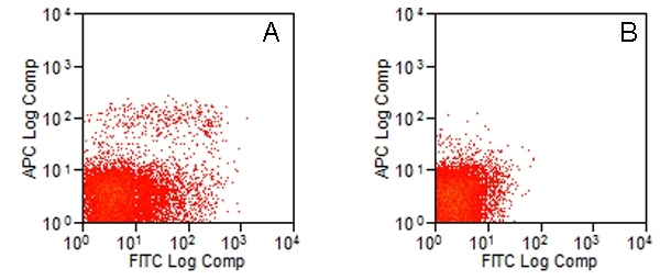 CD283 Antibody | 11F8 gallery image 2