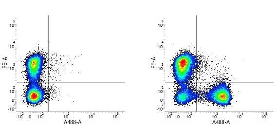 CD3 Antibody   145-2C11 gallery image 2