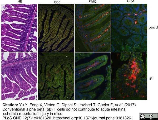 CD3 Antibody   145-2C11 gallery image 3