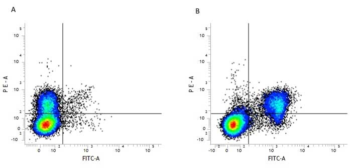 CD3 Antibody | KT3 gallery image 6