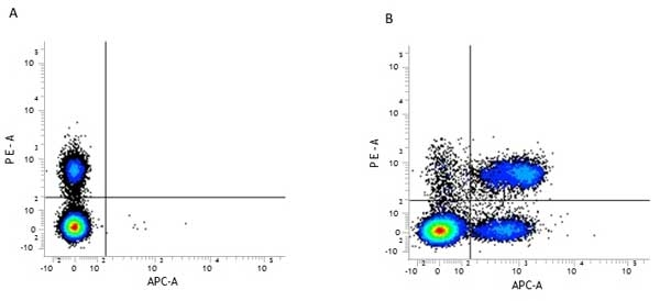 CD3 Antibody | KT3 gallery image 3