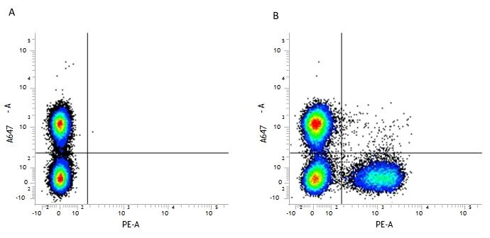 CD3 Antibody   KT3 thumbnail image 2