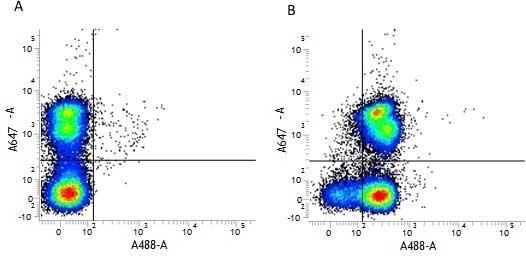 CD31 Antibody | ER-MP12 gallery image 2