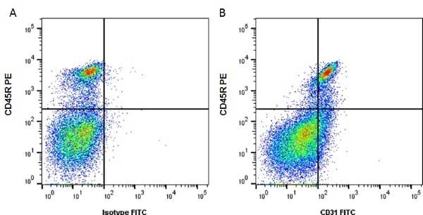 CD31 Antibody | ER-MP12 gallery image 1