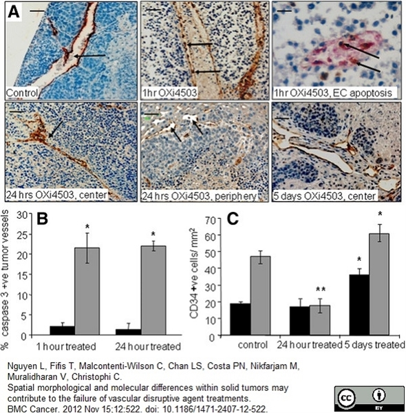 CD34 Antibody | MEC14.7 gallery image 7