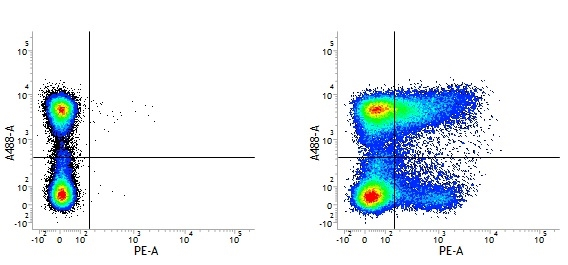 CD36 Antibody | MF3 thumbnail image 7