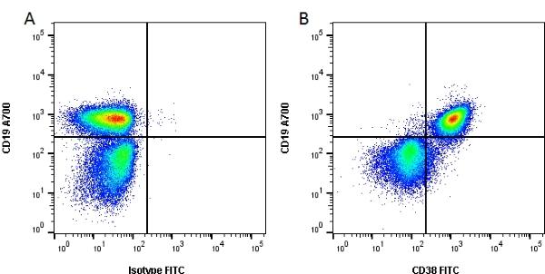 CD38 Antibody | 90 gallery image 1