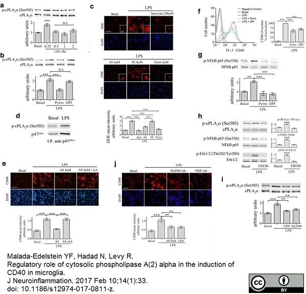 CD40 Antibody | 3/23 gallery image 3