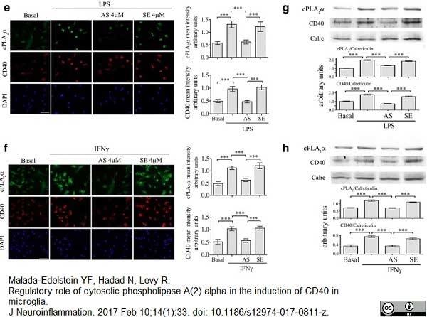 CD40 Antibody | 3/23 gallery image 2