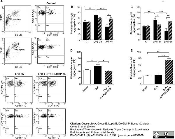 CD41 Antibody | MWReg30 gallery image 6