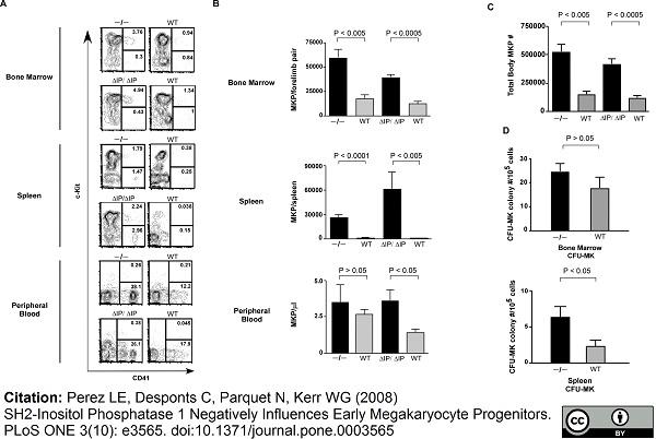 CD41 Antibody | MWReg30 gallery image 5