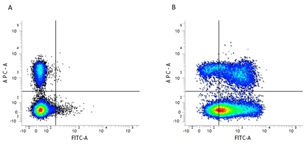 CD44 Antibody | 5035-41.1D gallery image 2