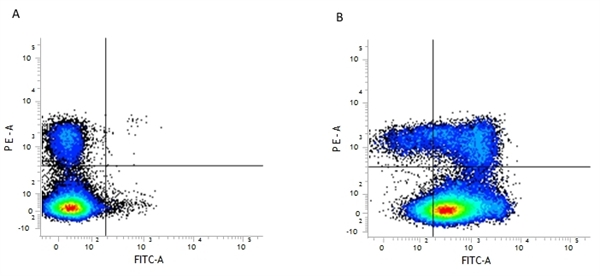 CD44 Antibody | 5035-41.1D gallery image 1